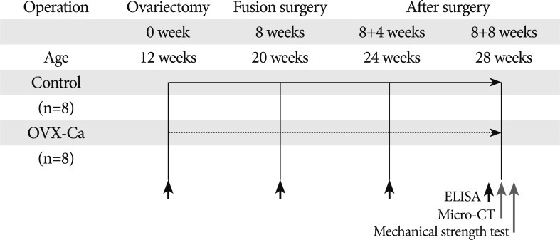 Effect of Dietary Calcium on Spinal Bone Fusion in an